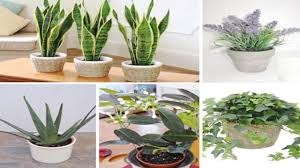Plants For Bedroom 5 Plants For Your Bedroom To Help You Sleep Better And Purify Your