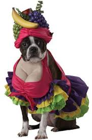 Dogs Halloween Costumes 10 Dogs Disguised Animals Halloween Halloween