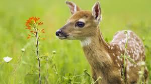 New Jersey wildlife images Njawr new jersey association of wildlife rehabilitators jpg