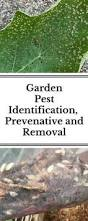 Garden Pests Identification - 25 unique insect identifier ideas on pinterest weeds in lawn