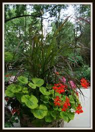garden july bloom day