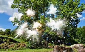 exploding pinata tree philip haynes philip haynes