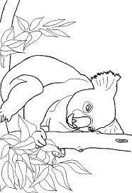 koala coloring free animal coloring pages sheets koala