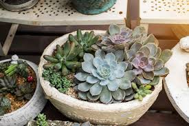 Buy Home Plans by Plans Database Cheapest Best Place To Buy Plants For Garden Place