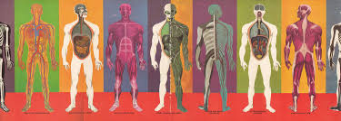 Human Anatomy Full Body Picture The Human Body What It Is And How It Works In Vibrant Vintage