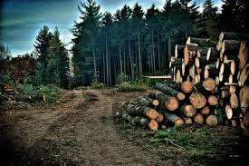 51 facts about deforestation conserve energy future