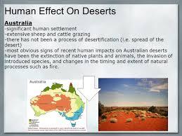 native australian desert plants liz stillman juliette langley phoebe staab victoria jukic emily
