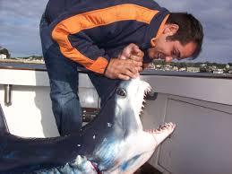 shark fishing charters gloucester ma blue makos