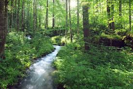 Deep Forest Green Deep Forest With River By Austriaangloalliance On Deviantart