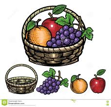 hand drawing style of fruits in the basket stock vector image