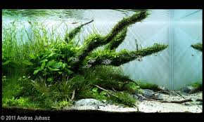 the jungle style planted tank aquascape awards