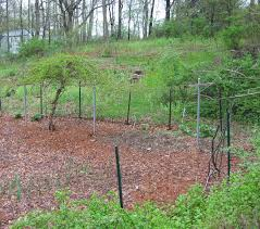 beautiful vegetable garden fence ideas installing electric