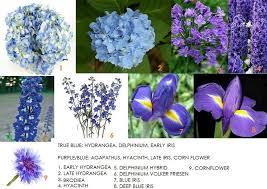 best 25 blue flower names ideas on pinterest purple flower