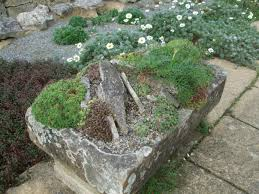 Alpine Rock Garden by Alternative Eden Exotic Garden Alpine Troughs Miniature Gardens