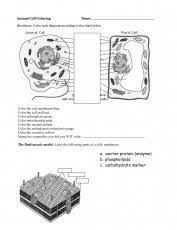animal cell blank animal cell coloring packet animal cell coloring