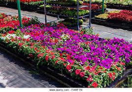 ornamental plants nursery stock photos ornamental plants nursery