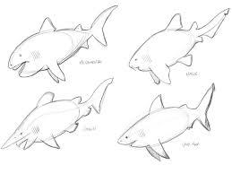 sharkupations art for sharks4kids u2014 scott soeder u2022 louisville