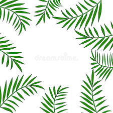 palm tree leaves border 2 stock vector illustration of modern