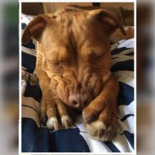 House Beautiful Change Of Address by Change Of Heart Pit Bull Rescue Home Facebook