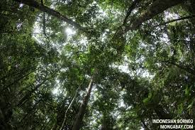 floor in the rainforest canopy