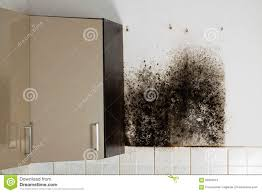 Black Mold Bathroom Best Way To Kill Mold Tags Black Mold In Kitchen Cabinets All