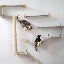 Wall Shelves For Cats Amazon Com Catastrophicreations Deluxe Cat Playplace Hammock