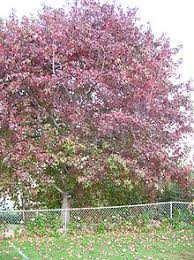 autumn leaf color