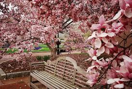 immagini di giardini fioriti giardini fioriti crea giardino realizzare un giardino fiorito