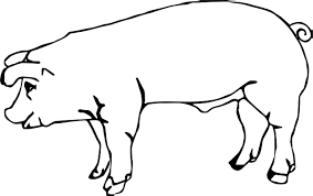baby farm animal pig coloring wecoloringpage