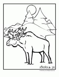 winter animal coloring pages moose homeschooling u0026 montessori