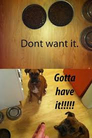 boxer dog jokes 32 hilarious struggles only dog owners will understand