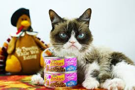 grumpy cat on only thing i m thankful for is the