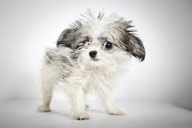 cani in cerca di casa foto cani in cerca di casa segnati dalla vita ma ancora