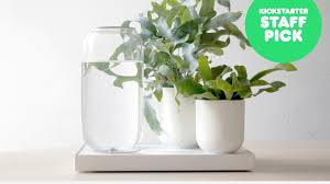 In House Plant Tableau Automatic House Plant Watering Tray By Pikaplant
