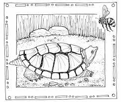 coloring book circle d wildlife refuge