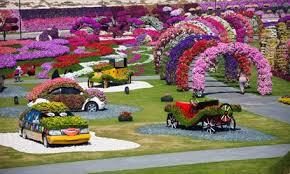 miracle garden dubai dubai miracle garden flower diary store