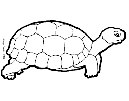 beautiful turtle coloring 24 free colouring pages