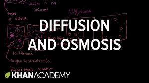 diffusion and osmosis membranes and transport biology khan