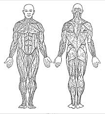 human anatomy chart page 21 of 202 pictures of human anatomy body