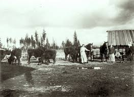 a drifting cowboy cowboy legacy montana stump ranch 1912