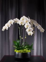 orchid arrangements faux orchid arrangements foter
