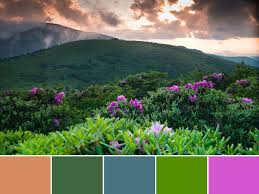 18 color palettes inspired by national parks hgtv