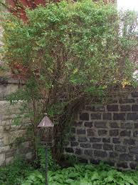 escape of the invasives top six invasive plant species in the invasive species u2013 arthur melville pearson