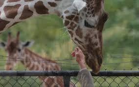 fort worth zoo aims to raise 100 million fort worth star telegram