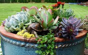Plants And Planters by Companion Plants In Succulent Planters