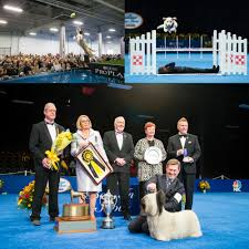 who won the dog show on thanksgiving 2016 national dog show presented by purina tickets in oaks pa