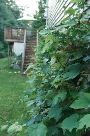 zaaberry gardening in a small yard