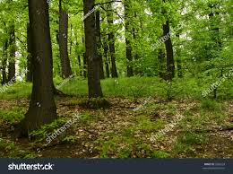 deep forest scenery summer spring stock photo 3376524 shutterstock