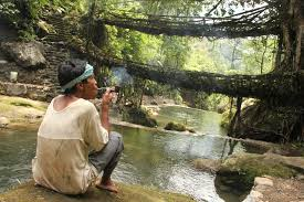 this indian tribe manipulates tree roots to create living bridges