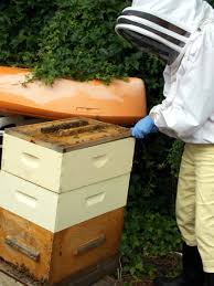 backyard beekeeping on the rise in new jersey by pat johnson